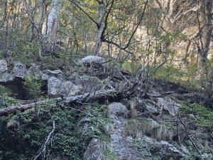 ニホンカモシカ(山寺)
